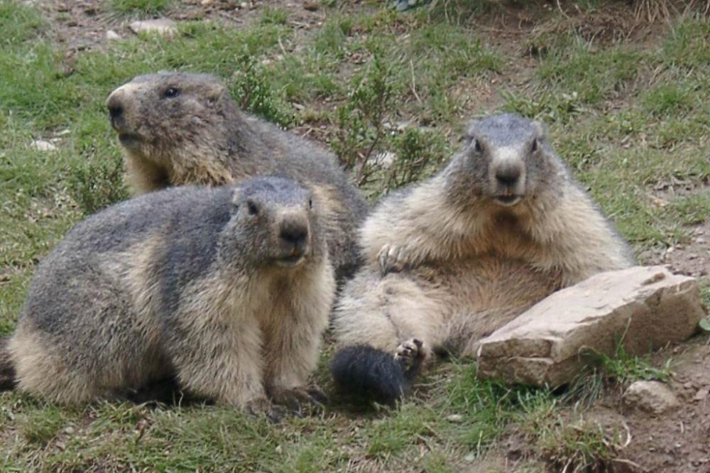 """Chasse aux """"Oeufs"""" de Marmottes"""