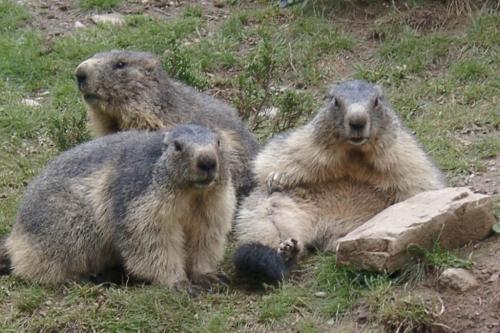 """Grande Chasse aux """"Oeufs"""" de Marmottes 2019"""